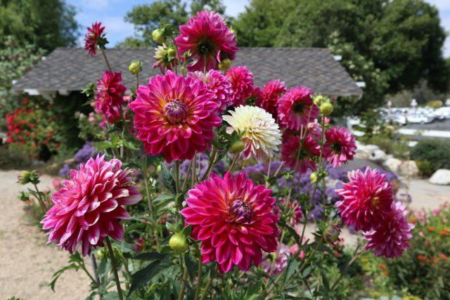 Madonna Inn botanical gardens San Luis Obispo