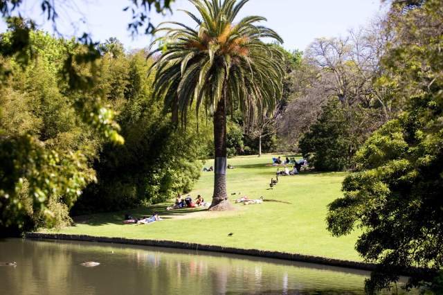 Lawns, palm trees and other lush vegetation at the Royal Botanic Gardens in Melbourne, Australia