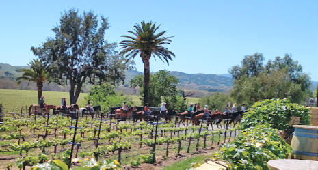 Livermore Winery Trail Ride April 22nd