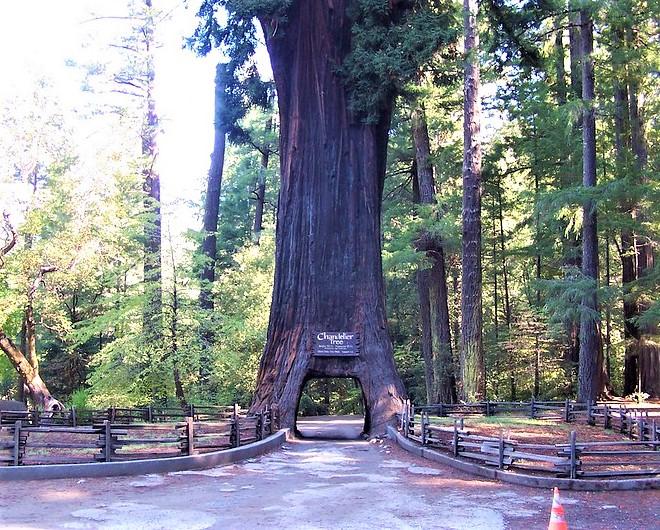 The Chandelier Drive Thru Tree