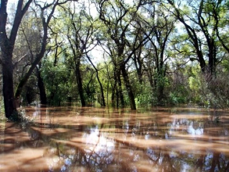 Flooded forests of the Cosumnes Preserve. Prior to reclamation of the floodplains of the Central Valley, there were vast forests containing a mix of oaks, cottonwoods, willows and other trees that were both tolerant of, and dependent upon, seasonal flooding. Flood flows are necessary for the health of riparian forests and the myriad animal communities that reside within them. These forests also subsidize the food webs of the river by contributing organic material and supporting abundant insect production.