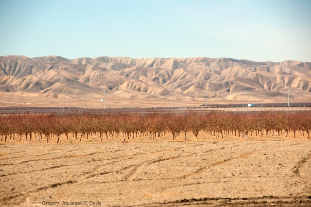 Dry fields and bare trees looking west, near San Joaquin, Calif. Photo by Gregory U