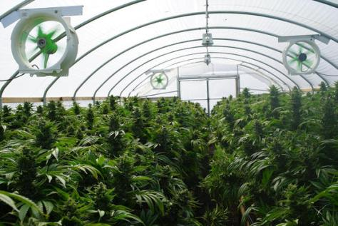 Can Leasing Help Your Cannabis Business?   The California Weed Blog
