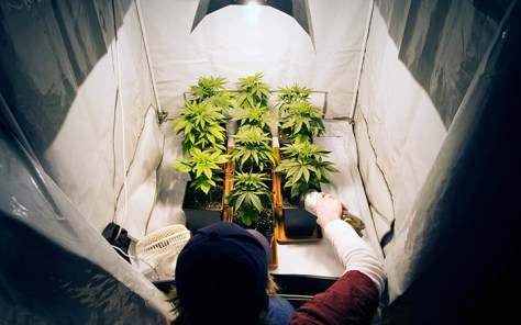 Quick and Easy Indoor Growing Tips to Increase Yield and Quality