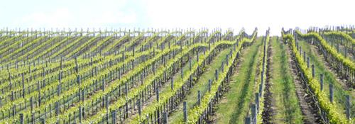 Heritage Wine Trail