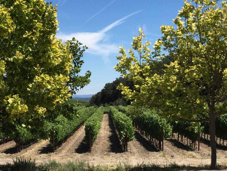 aventure winery vineyards