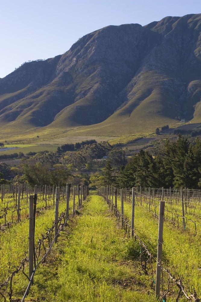 California Wineries Plan Your California Wine Adventure