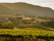 Joullian Vineyards