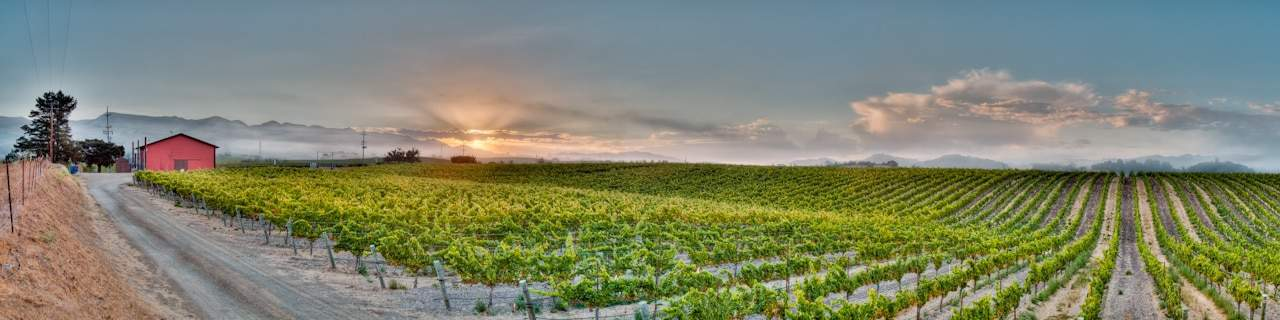 Edna Valley Wineries