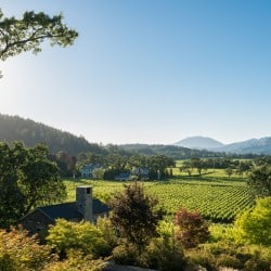 st. helena wineries vineyards