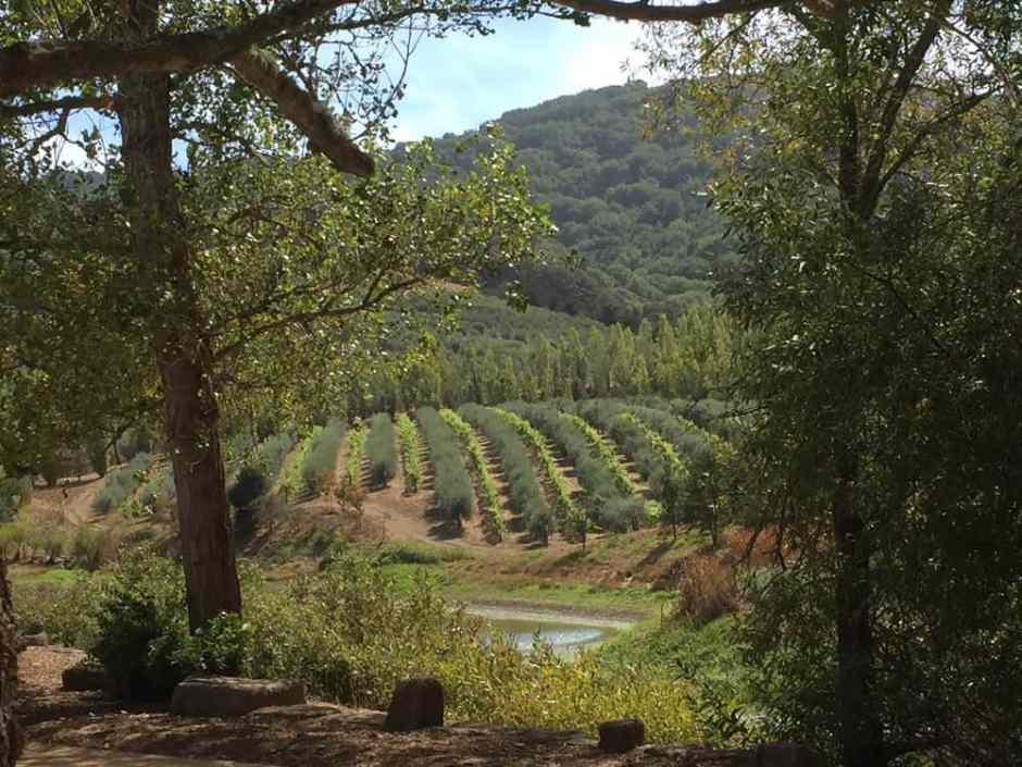 Mcevoy ranch wine tasting discount