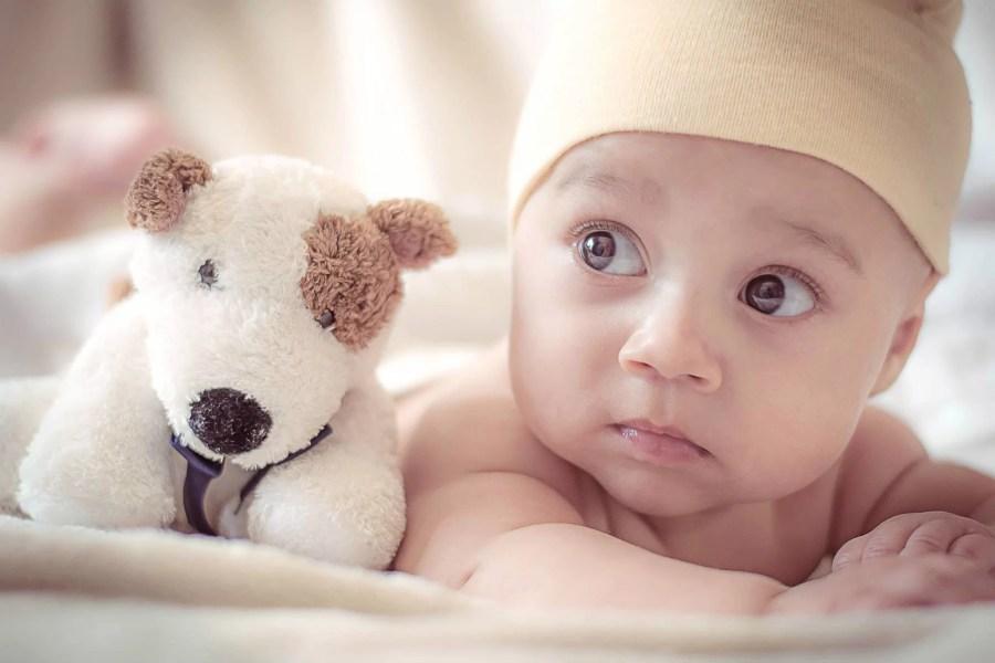 bébé chien peluche