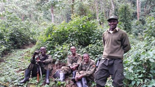 gorilla trekking leaders