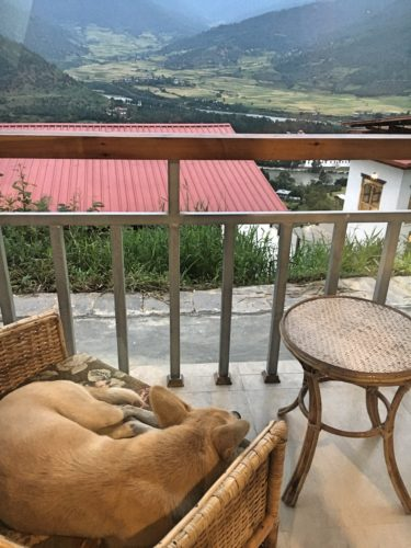dog on my balcony in punakha