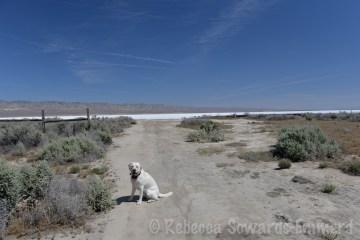 Thor at Soda Lake in Carrizo