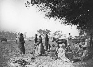 Slaves planting yams at the James Hopkinsons Plantation (Source: Wikipedia)