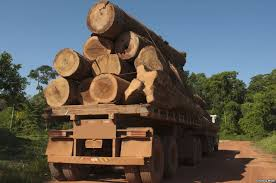 Illegal timber being conveyed
