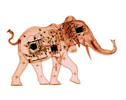 David Arky x-ray photograph: elephant