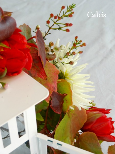 tulipe sur lantener