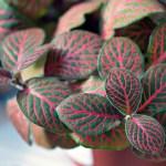 Les plantes dépolluantes, vraie solution ou simple arnaque?