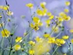 Les mauvaises herbes: comment s'en débarrasser naturellement