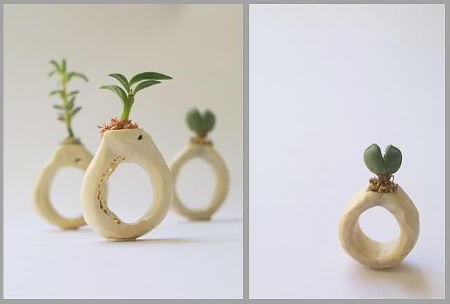 Anillos de huesos humanos y plantas