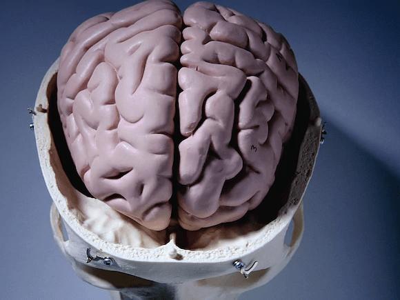 D - Las épocas difíciles pueden marcar al cerebro de mayor edad