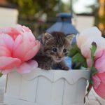 "Cat 2 scaled - Don't ""Kit-nap"" the Kittens!"