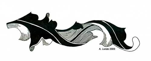 Pen and Ink Acanthus Leaf