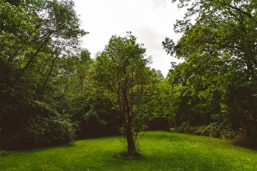 Gorgeous hamilton garden