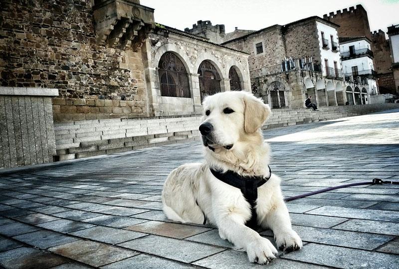 Educación canina CalmaDogs