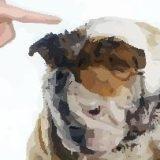 ¿Cuándo hace mal un perro?
