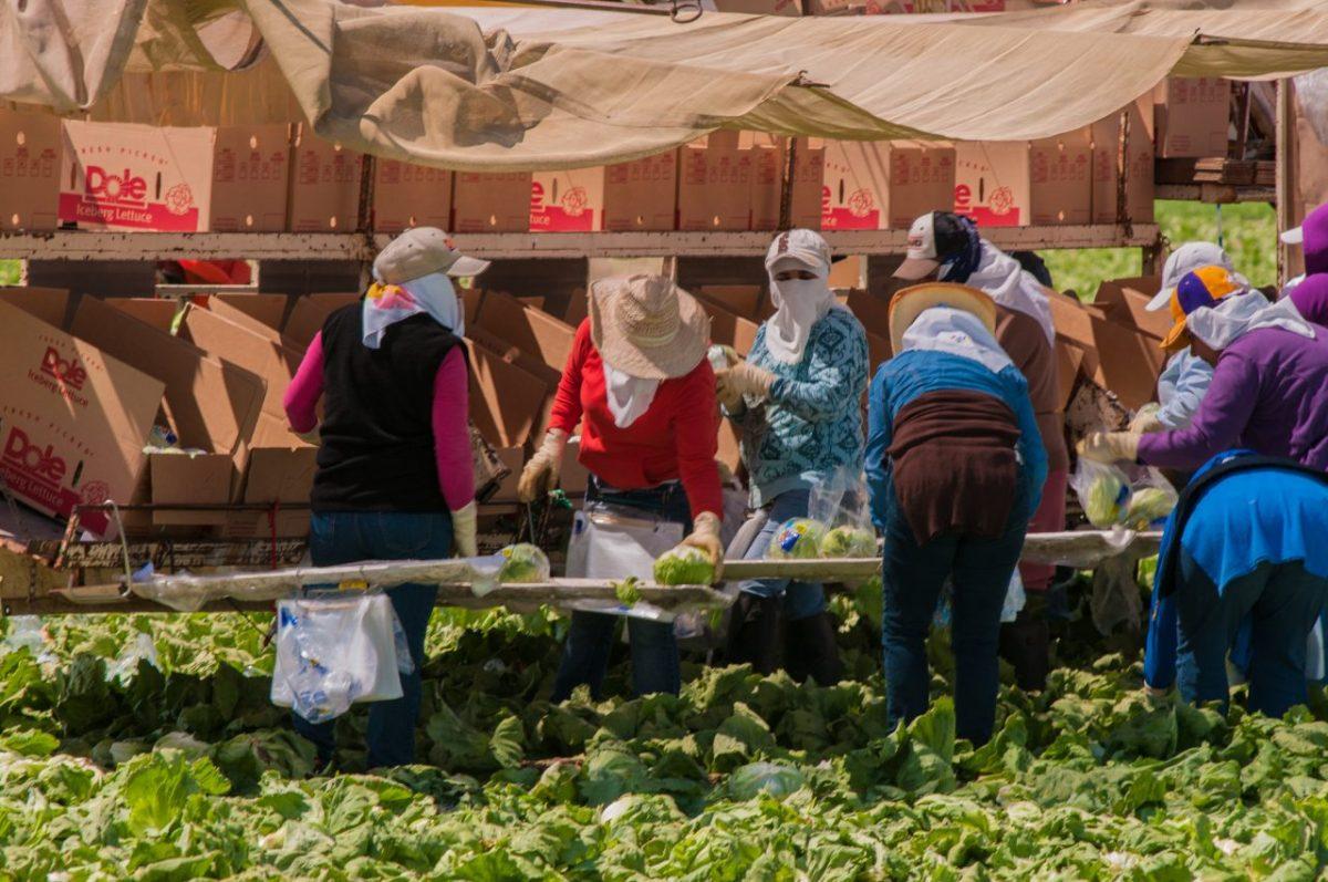 California farm workers. Photo by Bob Nichols/USDA