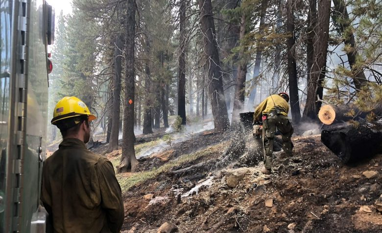 Fire crews working in the Tahoe National Forest are clearing hazard trees within a prescribed burn area. That's where fires are intentionally lit for forest health projects. Photo by Ezra Romero / Capital Public Radio