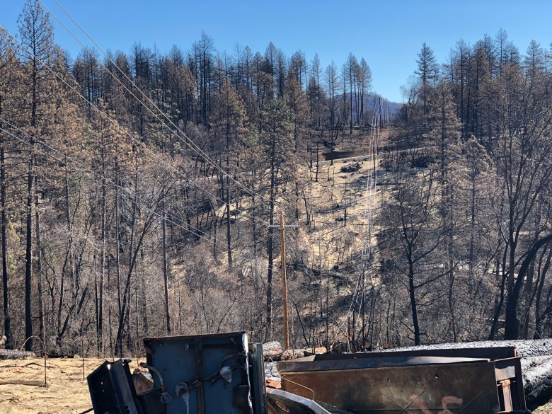 Photo of dead trees from the 2018 Camp Fire in Paradise, California. March 2019. Photo by Byrhonda Lyons/CALmatters.