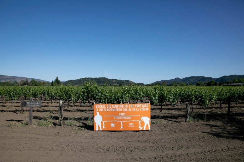 A sign encouraging vineyard workers to practice social distancing is posted among the grapevines on May 6, 2020 in Oakville. Photo by Anne Wernikoff for CalMatters