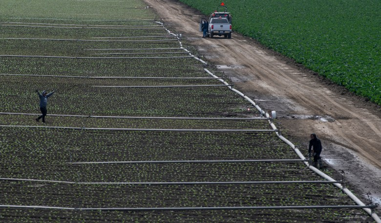 A vehicle drives along a field in the Salinas Valley, where farmworkers labor to harvest and pack the food stocking groceries on May 2, 2020. Photo by David Rodriguez, The Salinas Californian