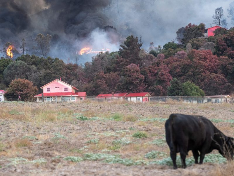 The River Fire destroyed nearly 3,000 acres and threatened 1,500 structures in Salinas, Calif., on Aug. 16, 2020 after an early morning lightning storm. Photo by David Rodriguez, The Salinas Californian