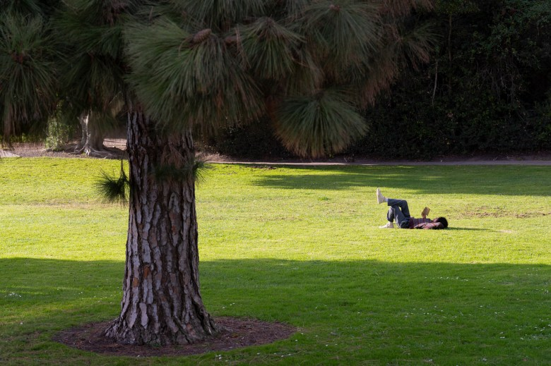 A person reads a book on the grass near the UC Santa Barbara campus lagoon on Dec. 8 2020. Photo by Max Abrams for CalMatters