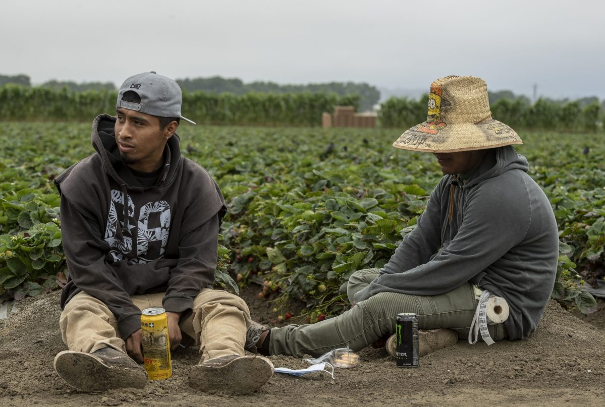 Two farmworkers sit at the end of strawberry field rows for their lunch break in Watsonville. Photo by David Rodriguez, The Salinas Californian