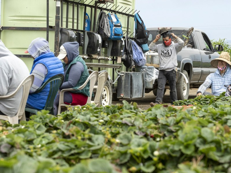 California is modifying the Housing for the Harvest program for farmworkers who have tested positive for COVID-19 by offering up to $1,000 in cash assistance, as well as allowing farmworkers to shelter at home, to boost participation. The expansion will launch in April for most counties. Photo by David Rodriguez, The Salinas Californian