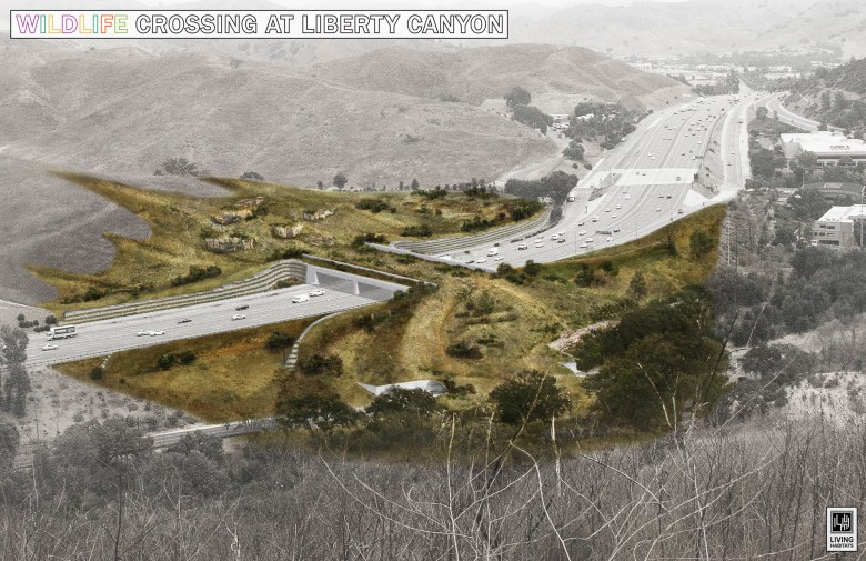 A rendering of the Liberty Canyon Wildlife Crossing, which would help restore connectivity in the Santa Monica Mountain Range, buffering mountain lions from extinction. Photo courtesy of National Wildlife Federation/Living Habitats
