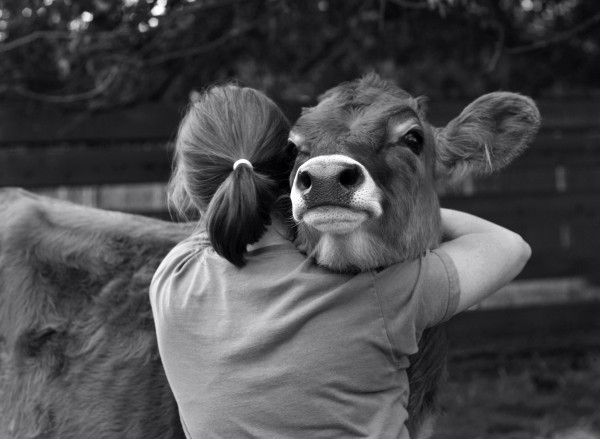 Image shows a woman hugging a cow while the cow's cute face shows over her shoulder; warm feelings are expressed in this picture as described in this article on CALMERme.com