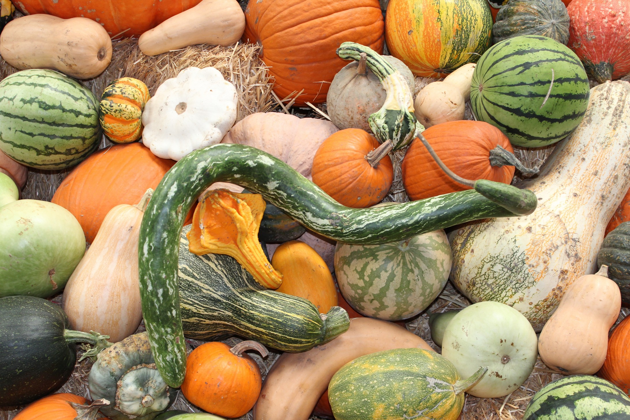 Image of fall vegetables from CALMERme.com