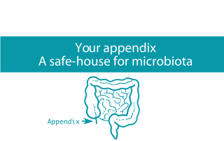 Image of gut and appendix which is now known to be a warehouse for microbiota from CALMERme.com blog
