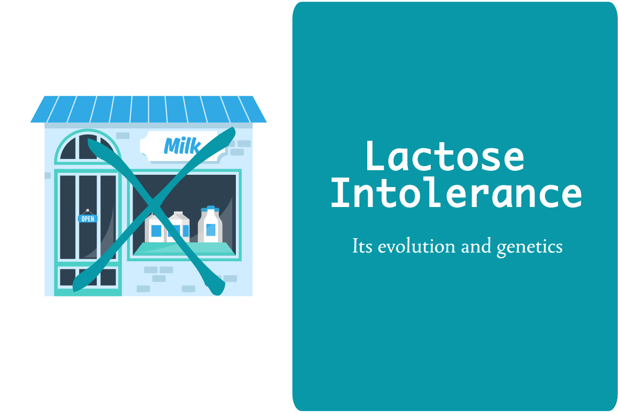 The evolution and genetics of lactose intolerance from CALMERme.com