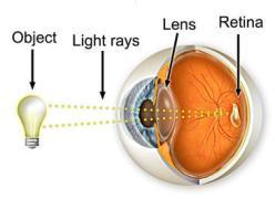 eye sights