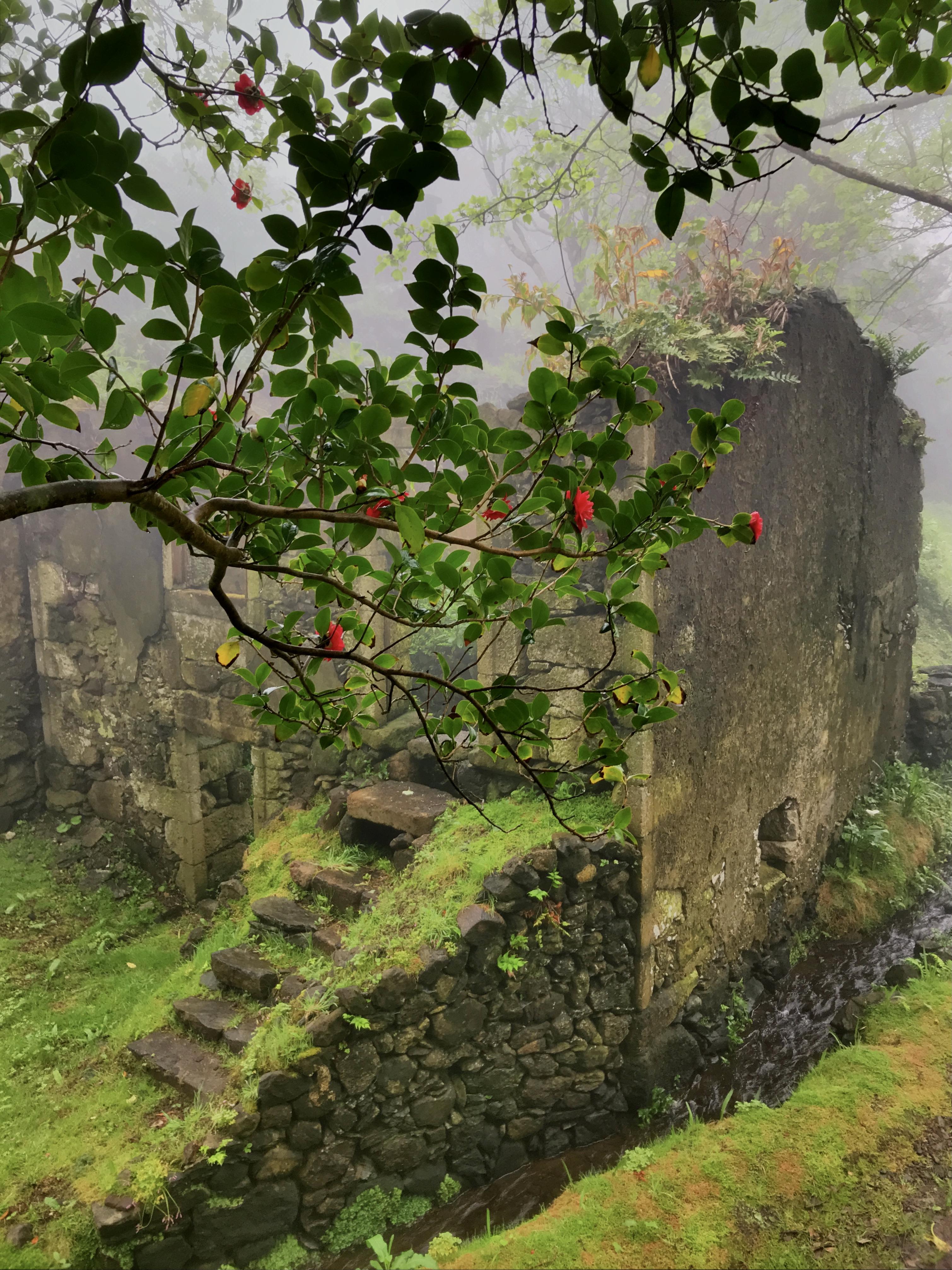 Casa do Verde through camellia