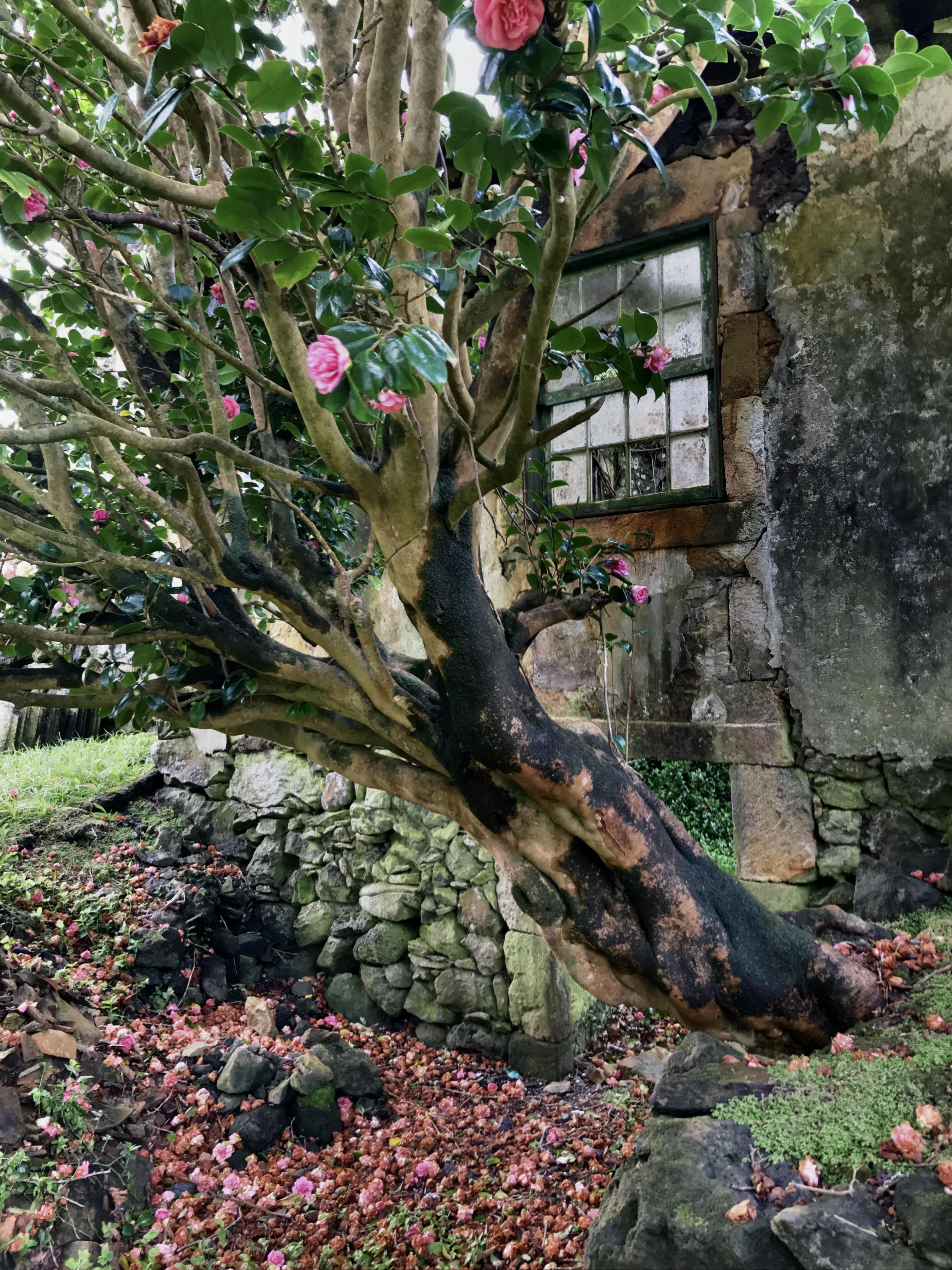Façade of Casa das Flores with camellia