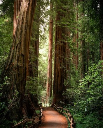 Path winding through california forest. California OCD and Anxiety Treatment Center treats all subtypes of Obsessive Compulsive Disorder (OCD) and anxiety spectrum disorders through online therapy, individual therapy, and intensive out-patient programs.